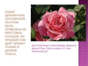 Для получения 1 килограмма эфирного масла Розы Грасса нужно 10 тонн лепестков