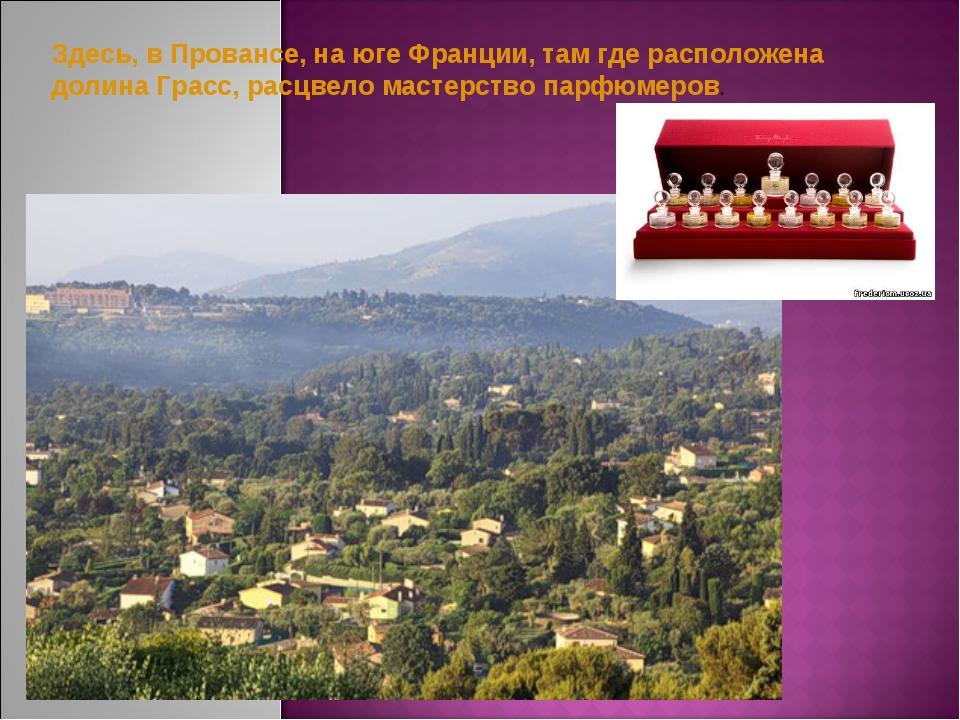 Здесь, в Провансе, на юге Франции, там где расположена долина Грасс, расцвело...