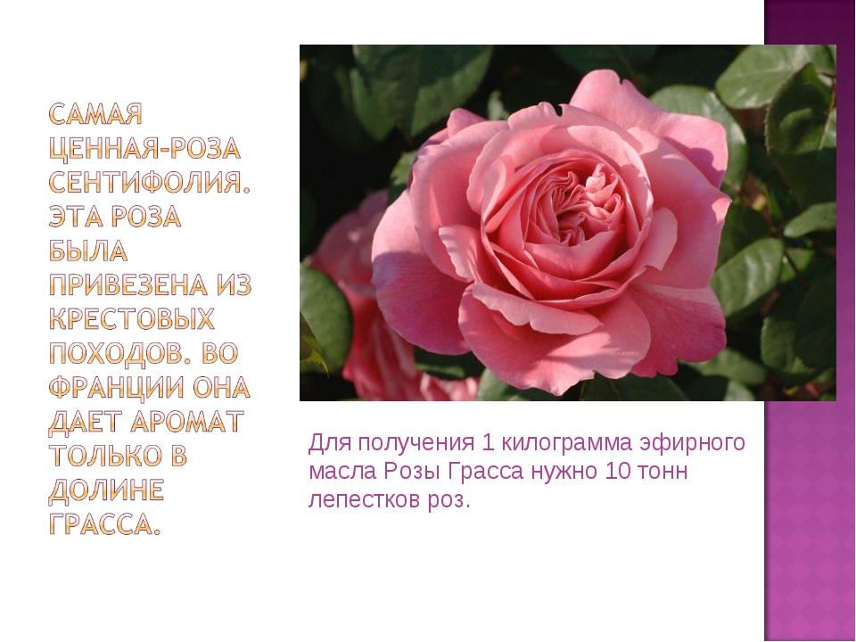 Для получения 1 килограмма эфирного масла Розы Грасса нужно 10 тонн лепестков...