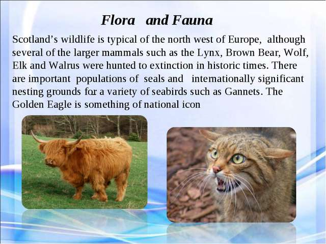 _ Flora and Fauna Scotland's wildlife is typical of the north west of Europe,...