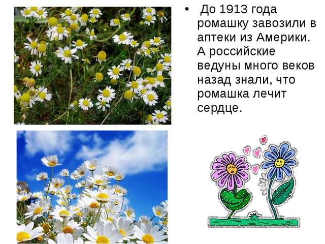 До 1913 года ромашку завозили в аптеки из Америки. А российские ведуны много...