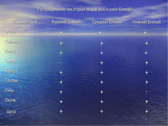 Распределение некоторых видов рыб в реке Енисей