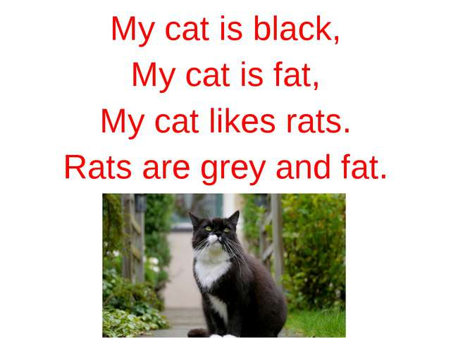 My cat is black, My cat is fat, My cat likes rats. Rats are grey and fat.