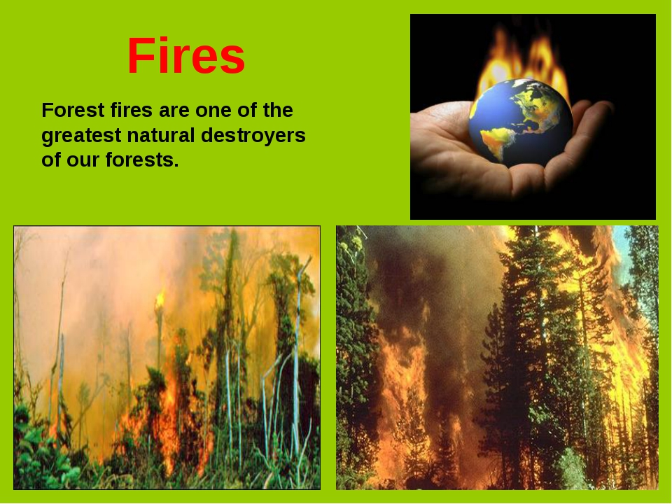 Forest fires are one of the greatest natural destroyers of our forests. Fires