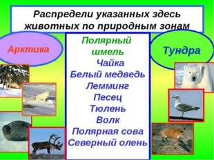 Распредели указанных здесь животных по природным зонам Арктика Тундра Полярны
