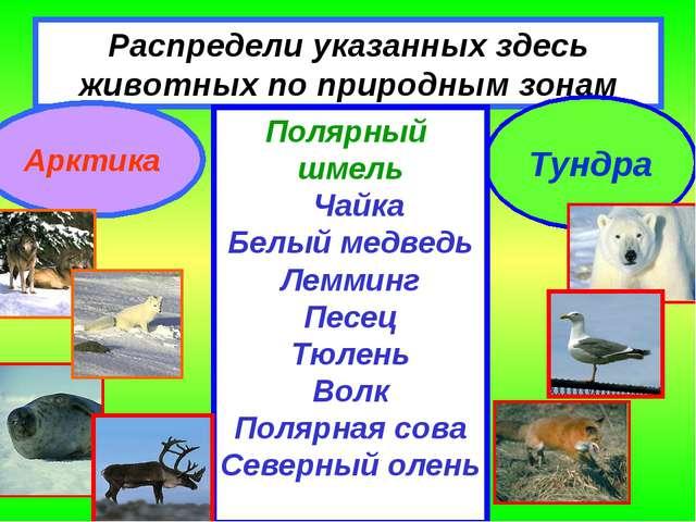 Распредели указанных здесь животных по природным зонам Арктика Тундра Полярны...