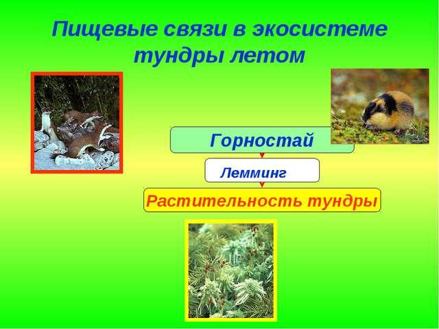 Пищевые связи в экосистеме тундры летом Лемминг