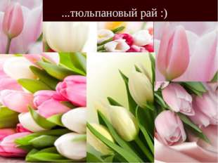 ...тюльпановый рай :)