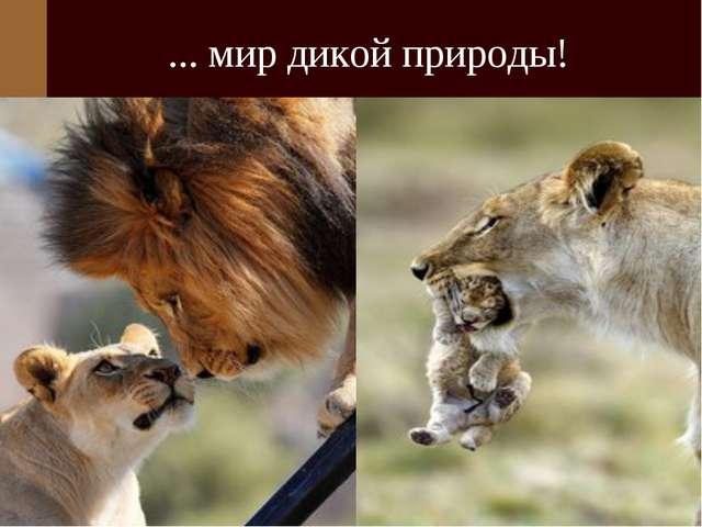 ... мир дикой природы!