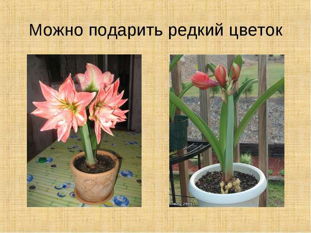 Можно подарить редкий цветок