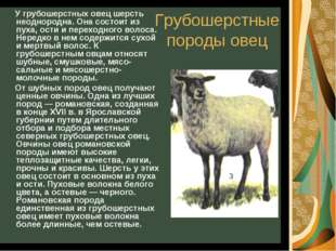 Грубошерстные породы овец У грубошерстных овец шерсть неоднородна. Она состои
