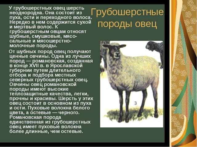 Грубошерстные породы овец У грубошерстных овец шерсть неоднородна. Она состои...