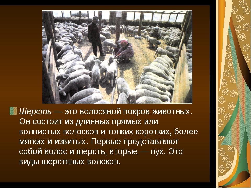 Шерсть — это волосяной покров животных. Он состоит из длинных прямых или волн...