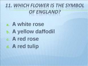 A white rose A yellow daffodil A red rose A red tulip