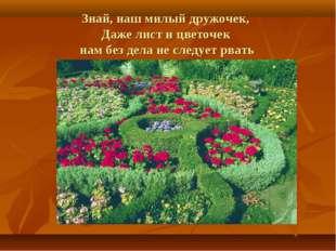 Знай, наш милый дружочек, Даже лист и цветочек нам без дела не следует рвать