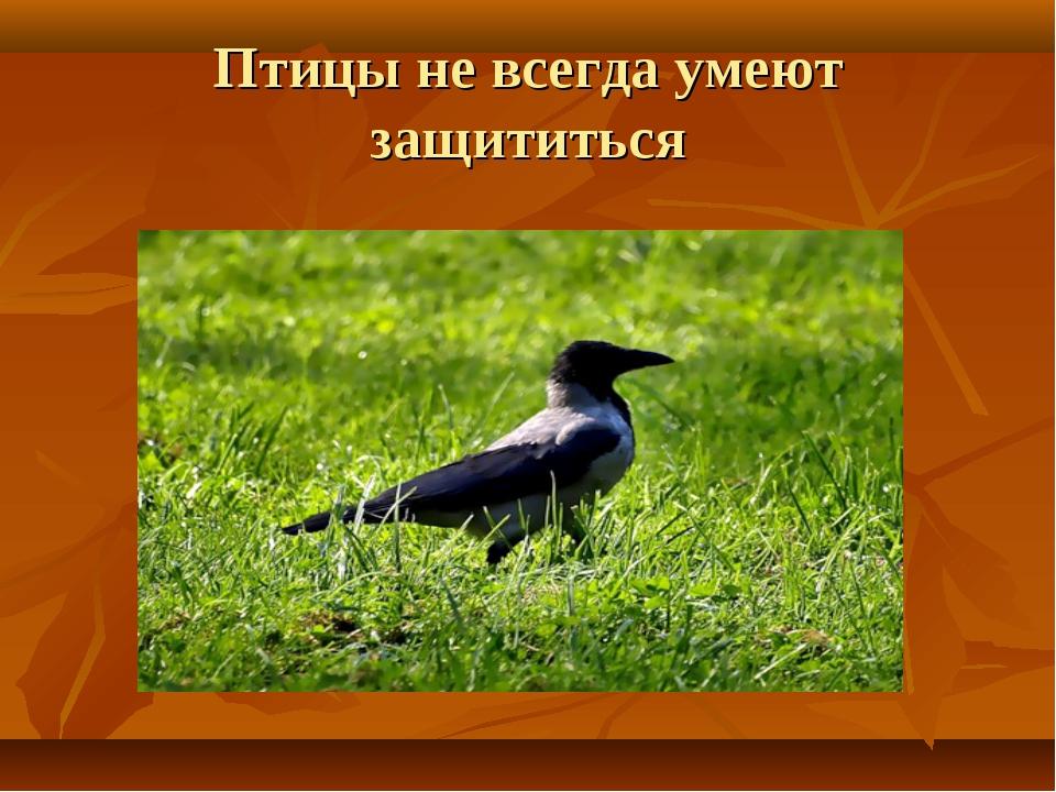 Птицы не всегда умеют защититься