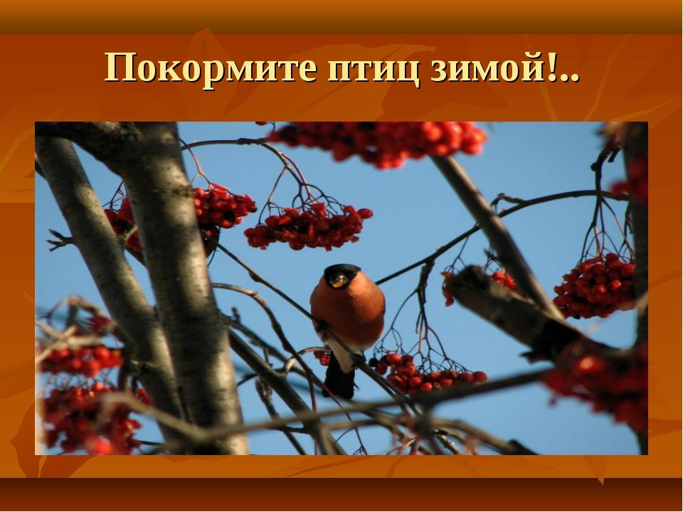 Покормите птиц зимой!..