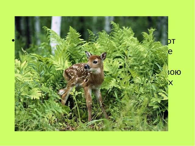 Если спугнёшь оленя и он бросится от тебя – ты увидишь у него сзади яркое бел...