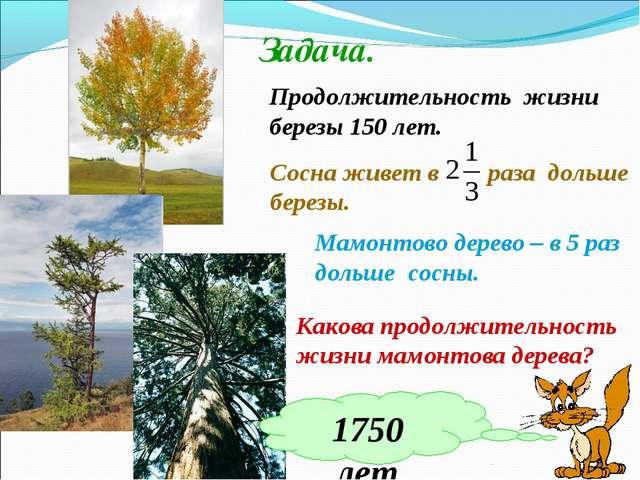Задача. Продолжительность жизни березы 150 лет. Сосна живет в раза дольше бер...