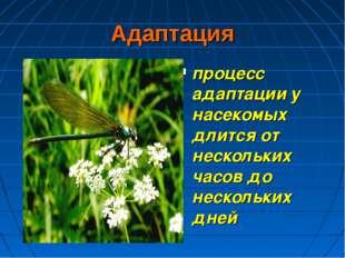 Адаптация процесс адаптации у насекомых длится от нескольких часов до несколь