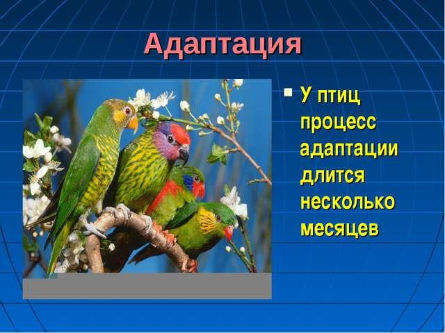 Адаптация У птиц процесс адаптации длится несколько месяцев
