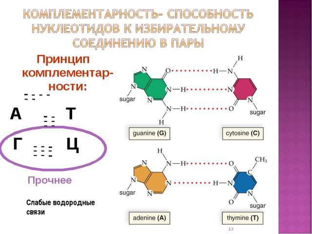 Принцип комплементар-ности: А Т Г Ц * Слабые водородные связи - - - - - - - -...