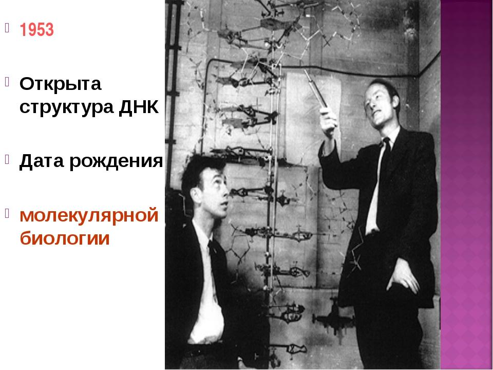 1953 Открыта структура ДНК Дата рождения молекулярной биологии *