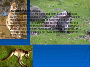 Animal world of Australia The tropical forests in the north and north-east ar