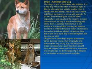 Dingo - Australian Wild Dog The dingo is one of Australia's wild animals. It