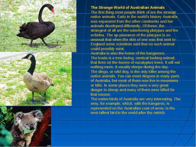 The Strange World of Australian Animals The first thing most people think of...