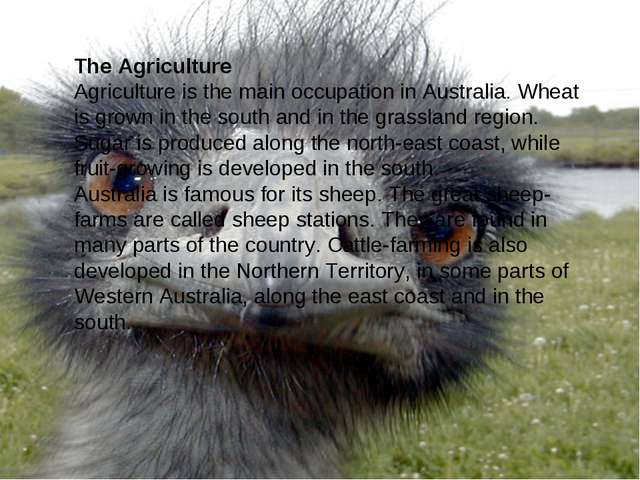 The Agriculture Agriculture is the main occupation in Australia. Wheat is gro...
