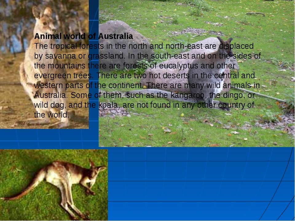 Animal world of Australia The tropical forests in the north and north-east ar...