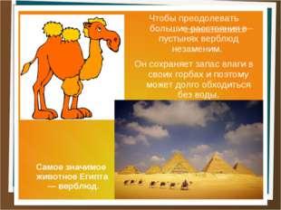 Чтобы преодолевать большие расстояния в пустынях верблюд незаменим. Он сохран