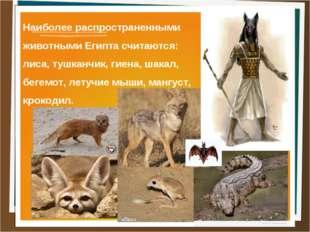 Наиболее распространенными животными Египта считаются: лиса, тушканчик, гиена