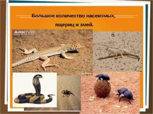 Большое количество насекомых, ящериц и змей.