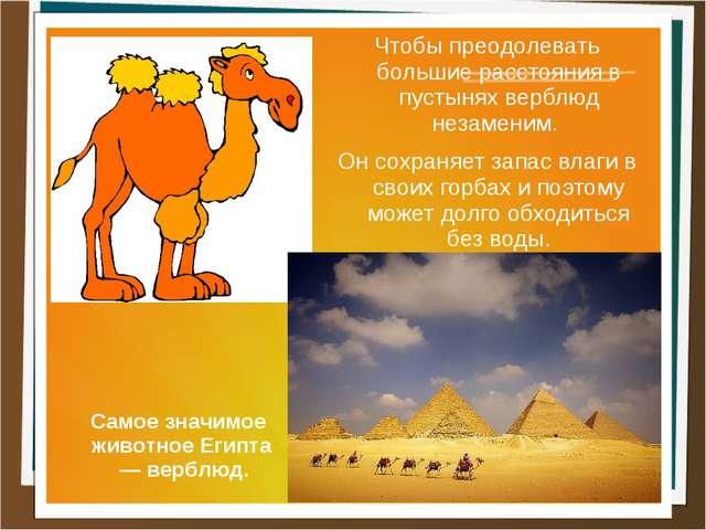 Чтобы преодолевать большие расстояния в пустынях верблюд незаменим. Он сохран...