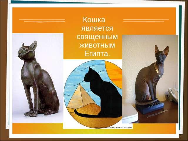 Кошка является священнымживотным Египта.