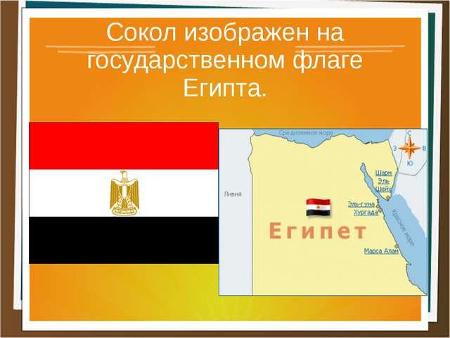 Сокол изображен на государственном флаге Египта.
