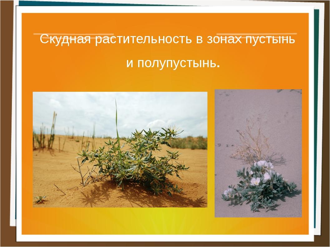 Скудная растительность в зонах пустынь и полупустынь.