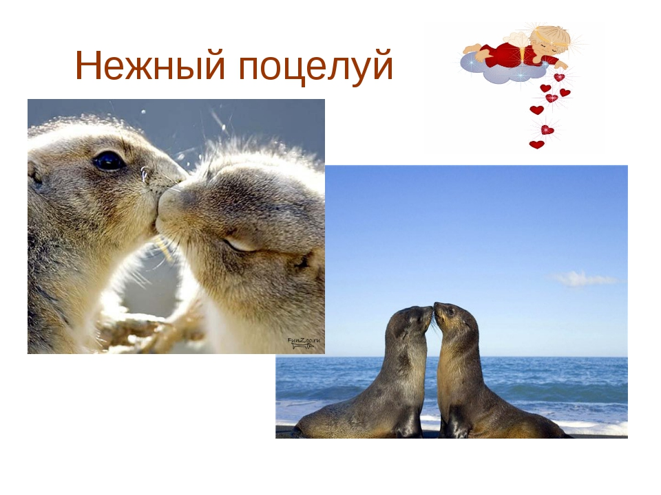 Нежный поцелуй