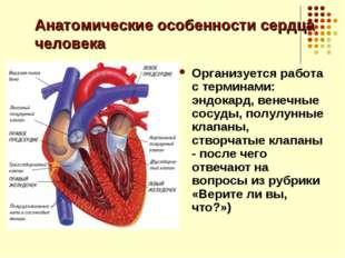 Анатомические особенности сердца человека Организуется работа с терминами: эн