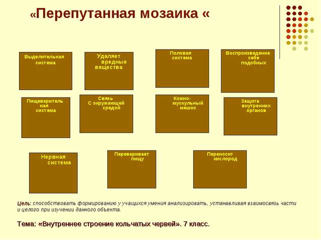 «Перепутанная мозаика « Выделительная система Нервная система Пищеваритель на...