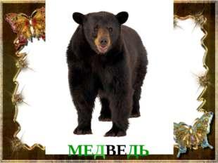 МЕДВЕДЬ Медведь