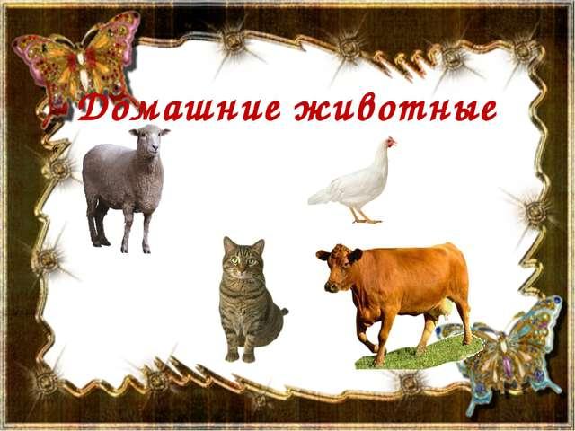 Домашние животные «