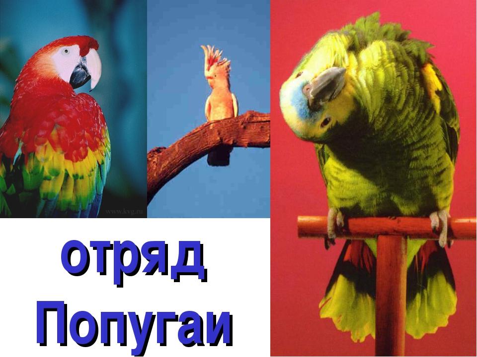 отряд Попугаи