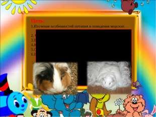 Цель: 1.Изучение особенностей питания и поведения морских свинок как домашне