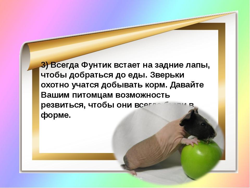 3) Всегда Фунтик встает на задние лапы, чтобы добраться до еды. Зверьки охот...