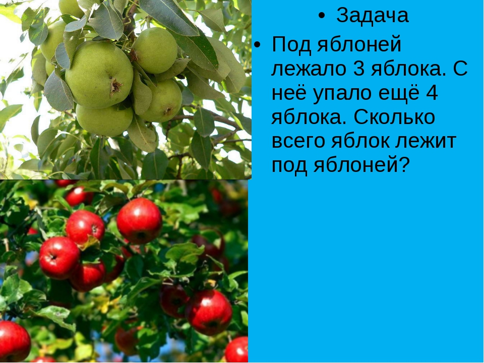 Задача Под яблоней лежало 3 яблока. С неё упало ещё 4 яблока. Сколько всего я...