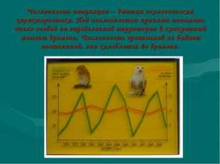 Численность популяции – важная экологическая характеристика. Под численностью