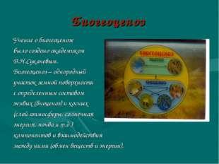 Биогеоценоз Учение о биогеоценозе было создано академиком В.Н.Сукачевым. Биог